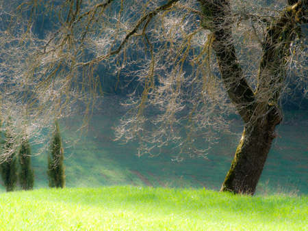 spring time in Tuscany photo