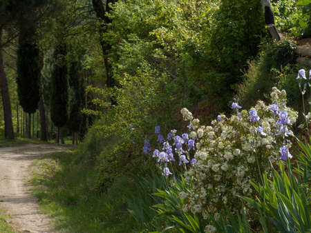 agriturismo: dirt road in Tuscany