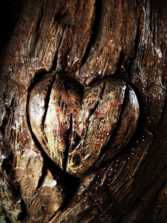 bark carving: Carvings heart on tree trunk