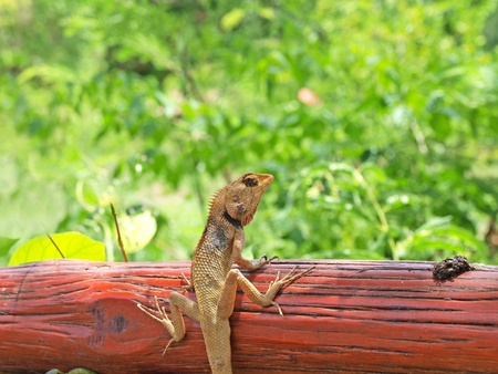 lizard on tree green background photo