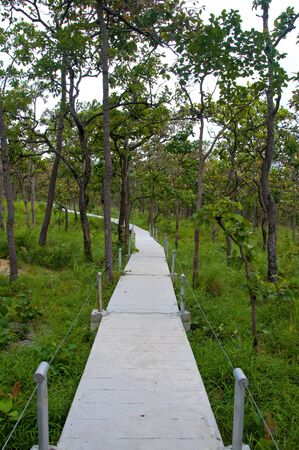 Pathway in the forest at national park  photo