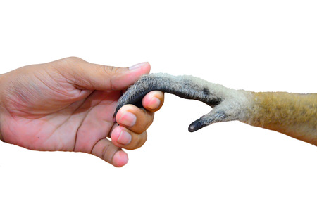 man touch hand together with a monkey Stock Photo - 22585239