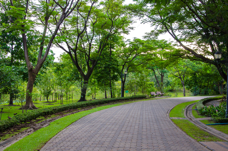 pedestrian walkway: Pedestrian walkway for exercise with trees in park. Stock Photo