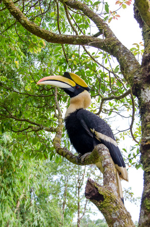Hornbill stand on the branch. photo