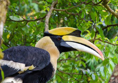 largest tree: Hornbill stand on the branch.