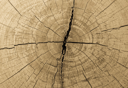 tree stumps and felled forest deforestation photo