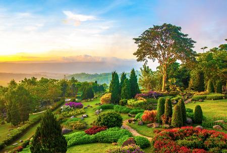 Prachtige tuin van kleurrijke bloemen op de heuvel in de ochtend