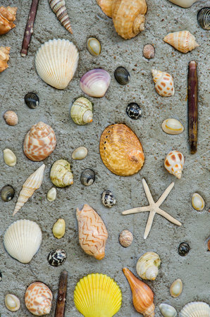Starfish and shells to decorate on cement wall. photo