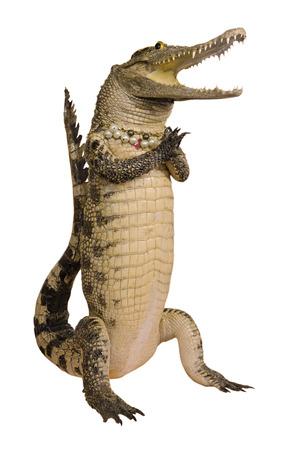 Crocodile hello isolate on white background.