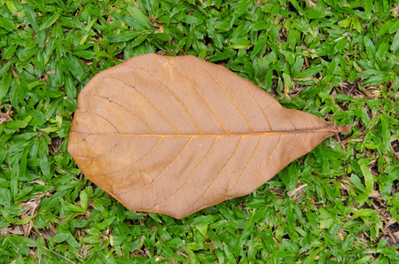 Dry leaves on the green grass. photo