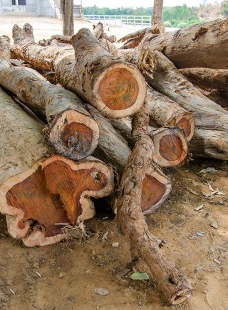 薪のローズウッドを記録します。 写真素材 - 34130084