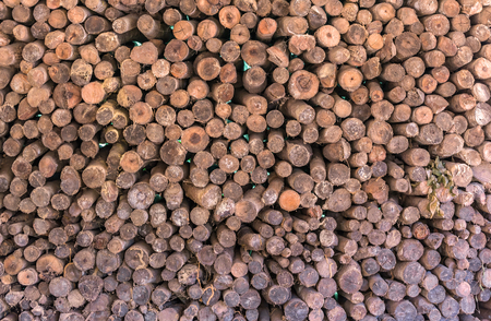 firewood: Firewood stacked up in a pile. Stock Photo
