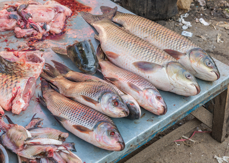 fishy: slice of Fresh fish for shop in a market.