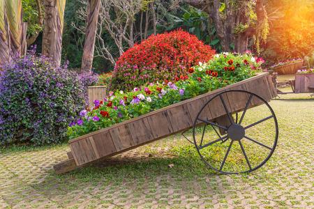 庭の木製台車のペチュニアの花のカラフルです。