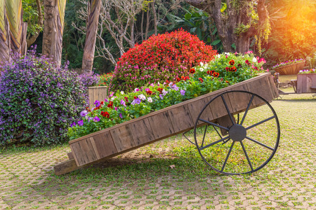 Colorful of petunia flowers on trolley wooden in garden.