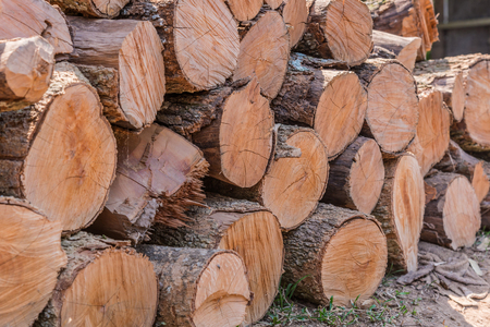 kindle: Firewood stacked up in a pile for kindle. Stock Photo