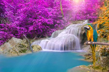 Papegaaiara tegen tropische waterval in diep bos.