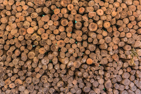 firewood: Firewood stacked up in a pile for kindle. Stock Photo