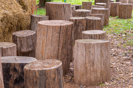 timber bench seat: Stumps used as chairs outside in the garden.