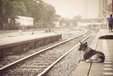 dog waiting: dog waiting for his master to the retro steam train station.