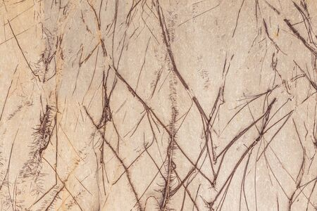 face in tree bark: tree roots covered cement walls at home. Stock Photo