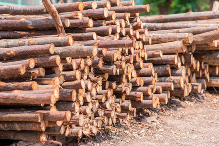 stacked up: Firewood stacked up in a pile for kindle. Stock Photo