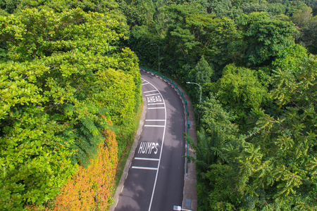 curving road with trees in a public park. top view. Stock Photo