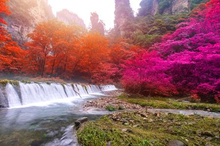 Zhangjiajie 국립 산림 공원, 후난, 중국에서 황금 채찍 스트림에 폭포. 스톡 콘텐츠