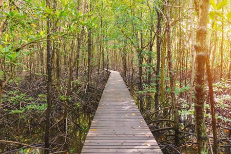 Mangrove trees and roots nature at Kung Krabaen Bay Thailand.