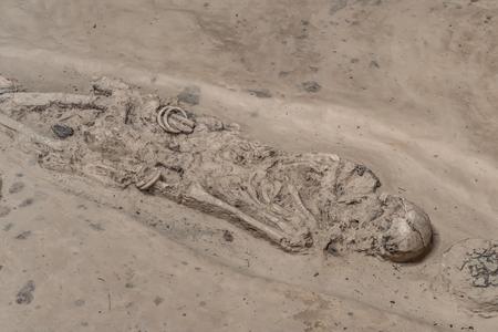 burial skeleton human bones from ancient grave. Reklamní fotografie