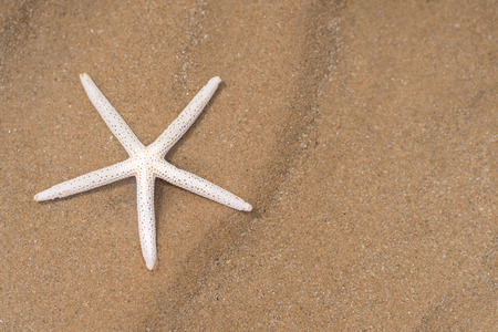 Starfish on sandy beach in summer with sea Stock fotó
