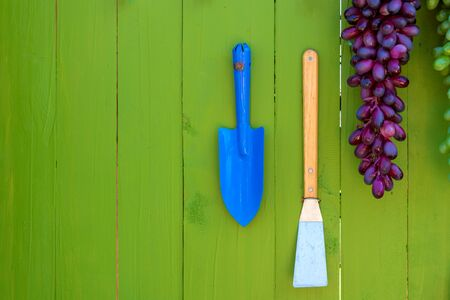 garden tools or agricultural tool on wooden green wall. Reklamní fotografie