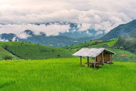cottage or hut in rice fields of the mist floating over village at Pa Pong Pieng Chiang Mai, Thailand.