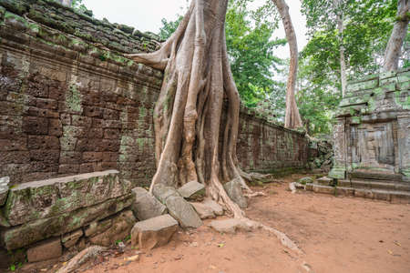 tree roots cover a historic Khmer temple in  Angkor Wat, Cambodia.