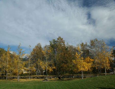 canmore: Aspen in park, Kananaskis mountains in background, blue sky, Canadian Rockies,Kananaskis, Canmore, Banff, Alberta, Canada
