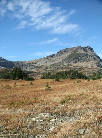 Logan pase, Bearhat de montaña, pradera en primer plano, Parque Nacional Glacier, Montana Foto de archivo - 843219