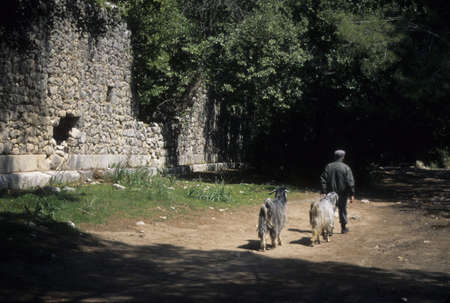 Old man and goats, city ruins,  Olympos, Turkey photo