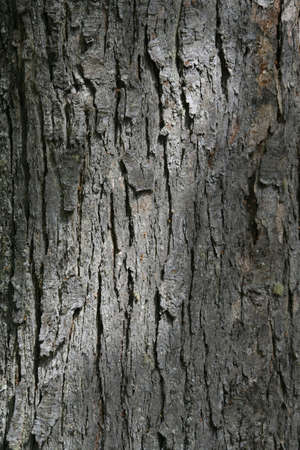 Detail, bark patterns on southern beech tree   Patagonia, Chile Reklamní fotografie