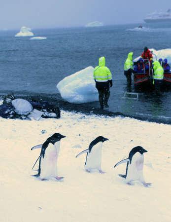 bluff: Adelie penguins walking past tourists,  [Pygoscelis adeliae] Brown Bluff, Antarctica