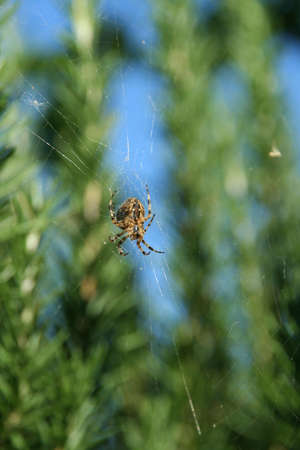 Spider hanging in its web, with blue sky in backgroundSeattleWA\r\n