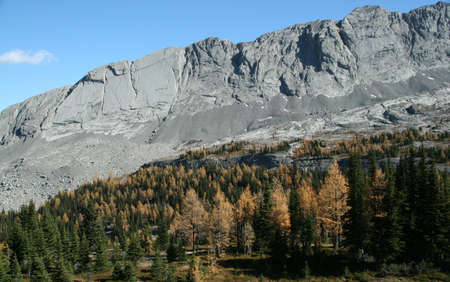 canmore: Whistling Ridge with larches, Burstall pass,Canadian Rockies,Kananaskis, Canmore, Banff, Alberta, Canada