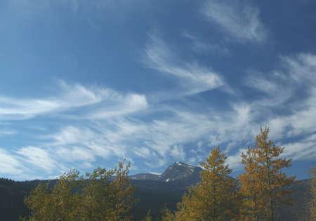poplars: Golden Poplars & high cirrus, autumn, Glacier National Park, Rocky Mountains, Montana