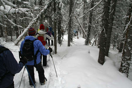 snowshoe: Blue parka, snowshoe hikers in woods,  Shrine pass, near Vail Pass,  Colorado