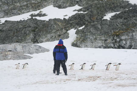 Directing traffic, gentoo penguins,  [Pygoscelis papua] Cuverville Island, Antarctica