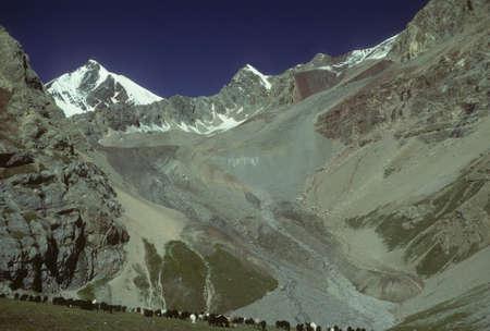 マルコ ・ ポーロの羊の平らな草原の放牧します。Descentdants チンギスハーンのモンゴル人の遊牧民が所有します。パミール高原山範囲、ヒマラヤ山 写真素材