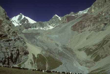 Marco Polo sheep grazing on flat steppes. Owned by nomads, descentdants of the Mongols of Genghis Khan.    Pamir mountain range, Himalayas, Central Asia, former USSR, now border of Tajikistan and Kyrgyzstan, near Afghanistan   Imagens