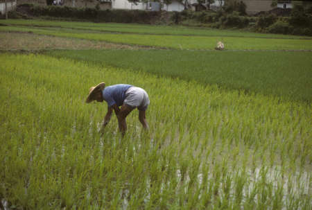 中国の黄山の近くの田んぼを傾向がある人