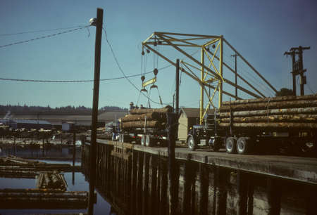 Crane unloading logging trucks into sorting pond,  Shelton, Pacific Northwest   Stock Photo