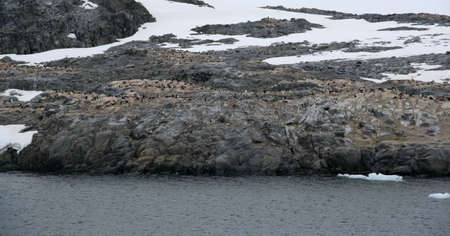 Gentoo penguin rookery, nesting penguins with glacier icefall in background, [Pygoscelis papua], Port Lockerby, Antarctica