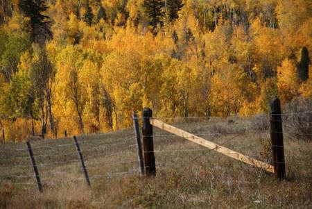 bridger: Fall colors in Idaho hills,  Bridger Teton National Forest, Idaho   Stock Photo